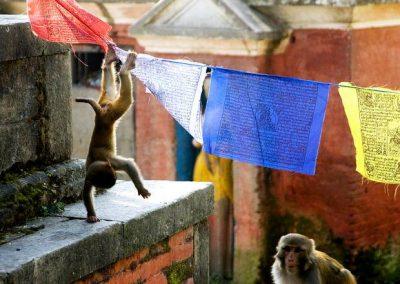 Nepáli gyorstalpaló