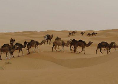 Nomád VándorLáss a Szaharában – 2020. tavasz