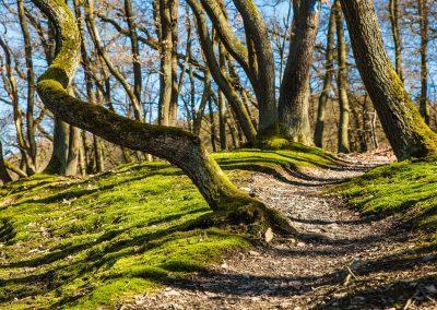 VándorLáss – Tavaszi, erdei elcsendesülés a böjtben